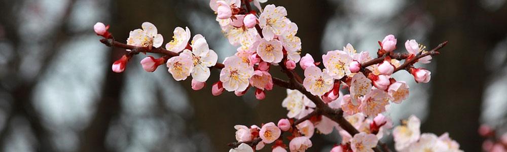 De beste tuintips voor april